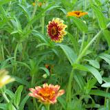 Gardening 2010, Part Two - 101_3311.JPG