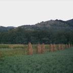 2012 21 August 006.jpg