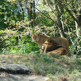 Pittsburgh Zoo Revisited - DSC05108.JPG