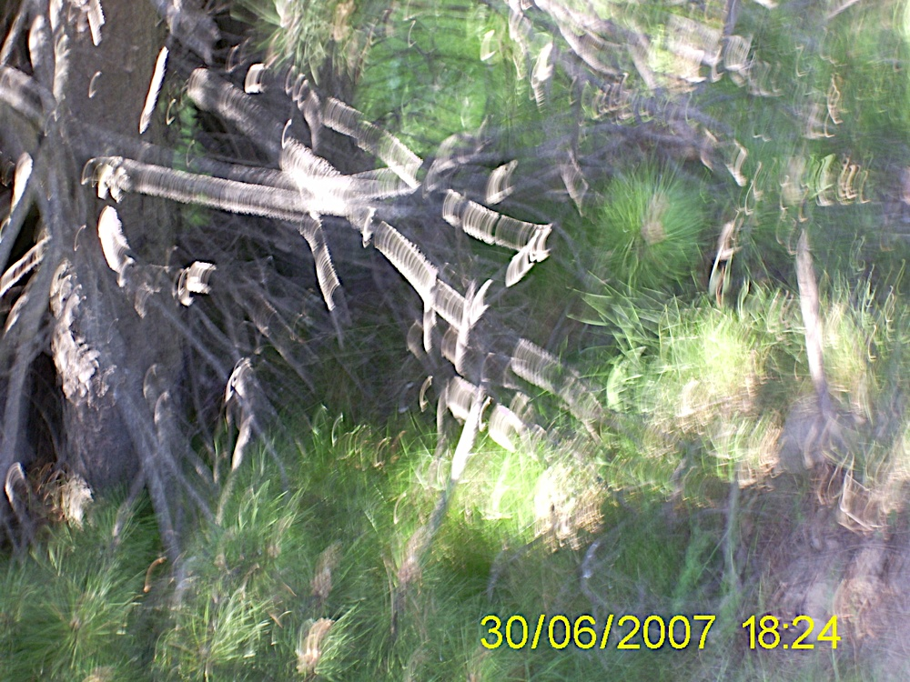 Taga 2007 - PIC_0043.JPG