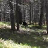 bear_zoomed.jpeg