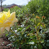 Gardening 2010 - 101_0436.JPG