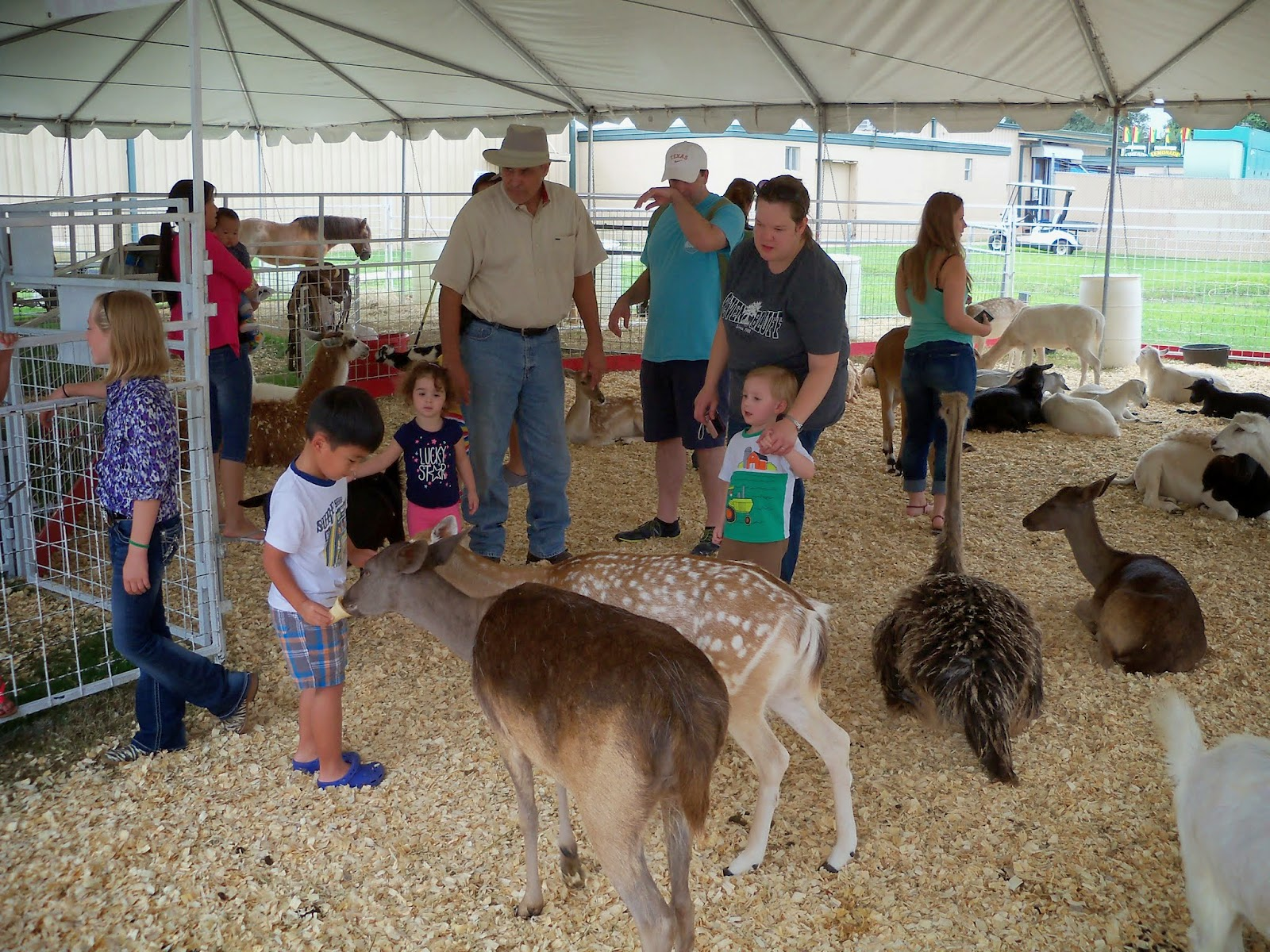 Fort Bend County Fair 2014 - 116_4330.JPG