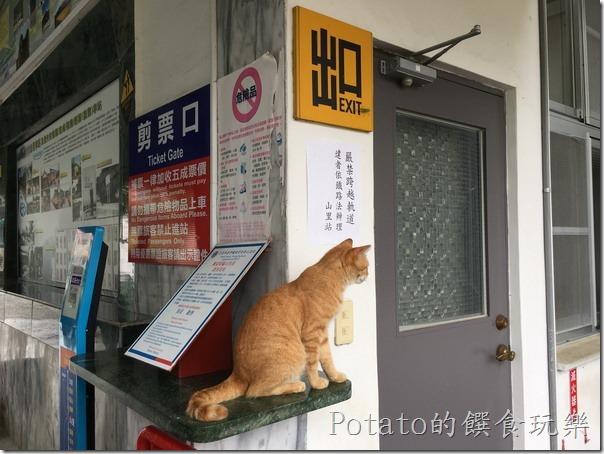 山里車站-貓