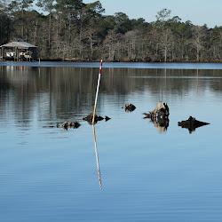 Fowl Marsh from Boat Feb3 2013 093