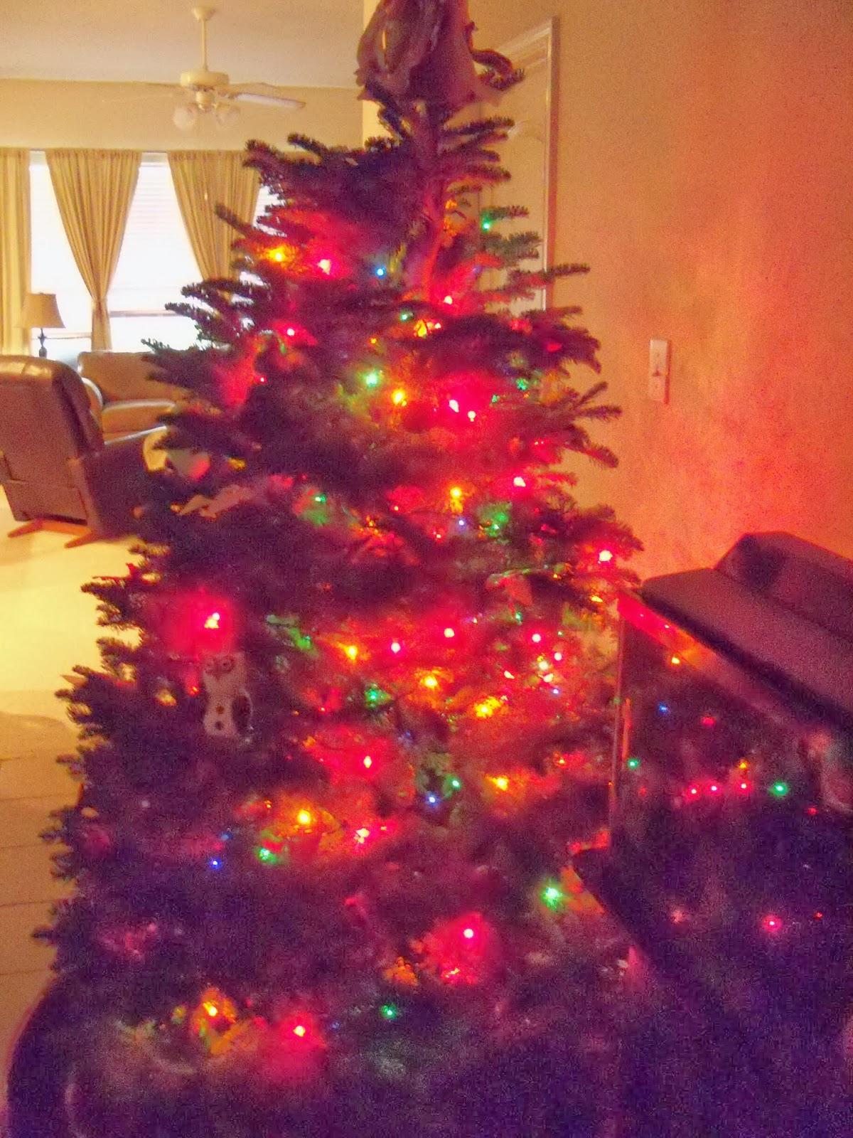 Christmas Lights - 115_9051.JPG