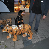 KNON-honden in Emmen - DSC_0824.JPG