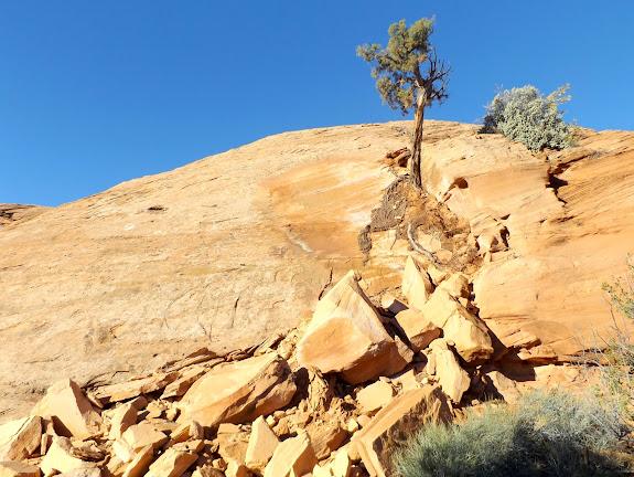 Fresh rockfall