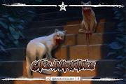 Gatos Amarantinos