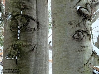 ochii padurii