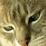 Amy Hyler-Essig's profile photo