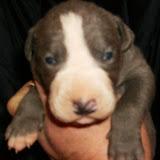blue babies @ 11 days