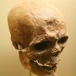 Musée d'archéologie nationale, Paléolithique supérieur : crâne d'un Homo Sapiens (moulage)