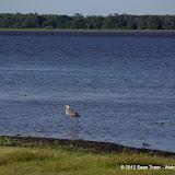 04-06-12 Myaka River State Park - IMGP4447.JPG