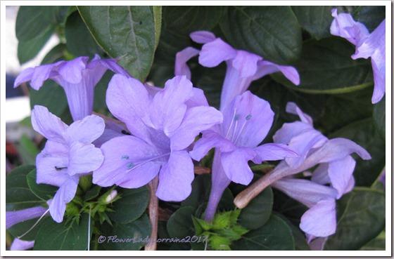 12-05-phil-violet