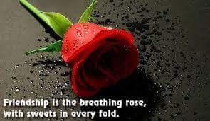 english quote on red rose