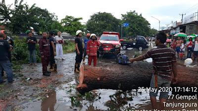 Akibat Angin Kencang Pohon Besar dan Tua Tumbang di Tanjungpura Karawang