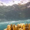 Buck Island Reef - IMGP1149.JPG
