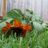 Gardening 2010, Part Three - 101_3609.JPG