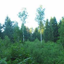 Taborjenje, Lahinja 2005 1. del - img_0742.jpg