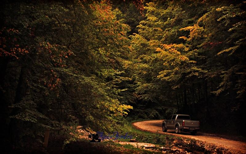 drum forestier prapastiile zarnestilor
