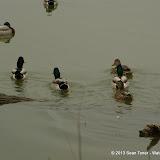 01-26-13 White Rock Lake - IMGP4330.JPG