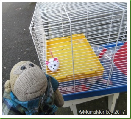 Hamster Cage 2