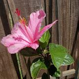 Gardening 2013 - 115_5681.JPG