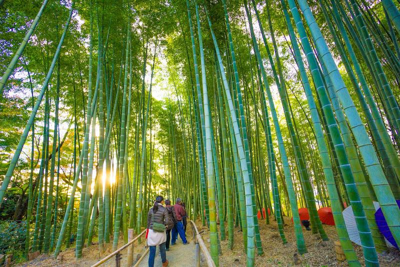 京都 高台寺 竹林 写真