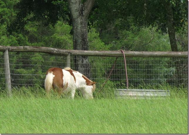 horseIMG_0582