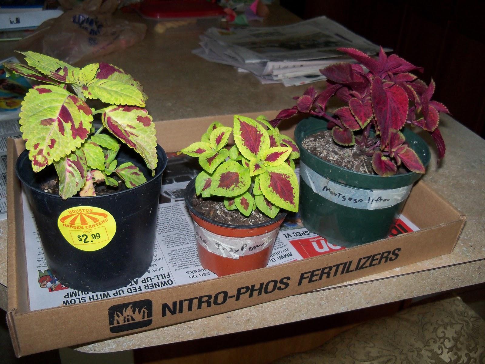 Gardening 2010, Part Three - 101_4755.JPG