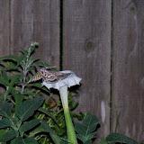 Gardening 2014 - 116_3591.JPG