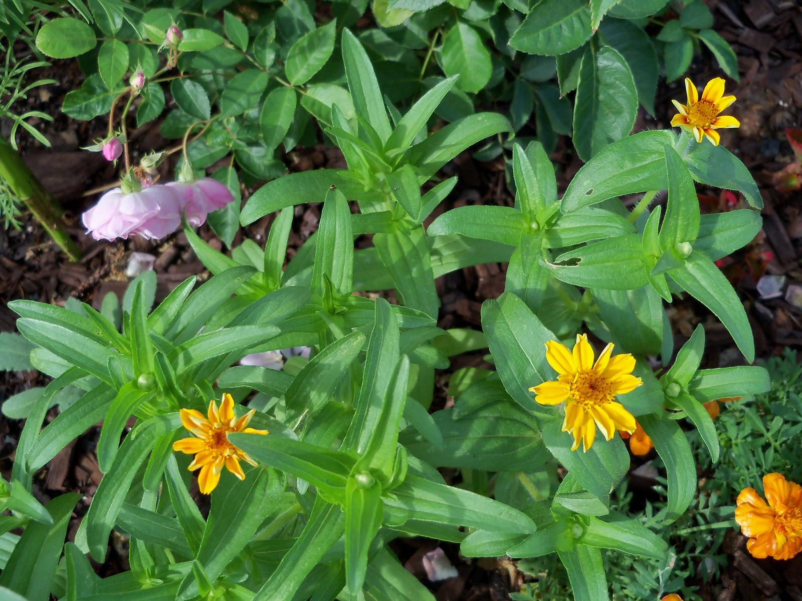 Gardening 2010, Part Two - 101_2273.JPG