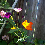 Gardening 2012 - 115_2524.JPG