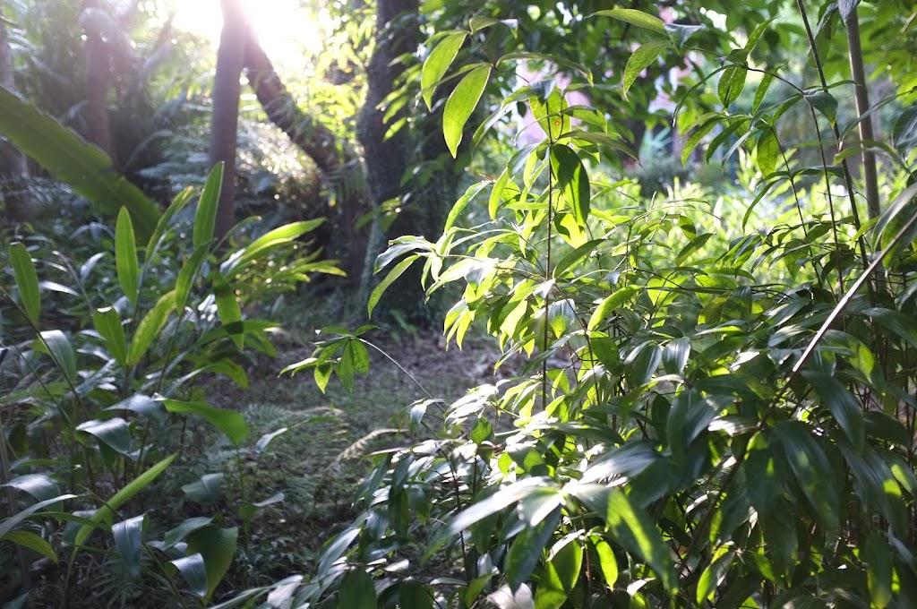 Taipei Botanical Garden