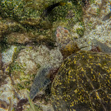 galapagos - Galapagos_FB_2-138.jpg