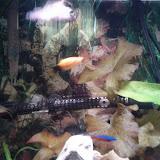 Fish - IMG_20121230_163342.jpg