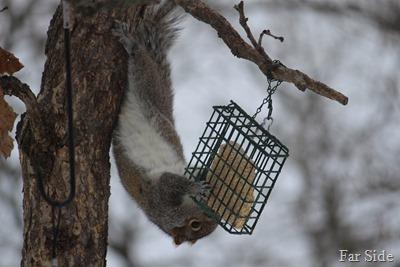 Squirrel Feb 6