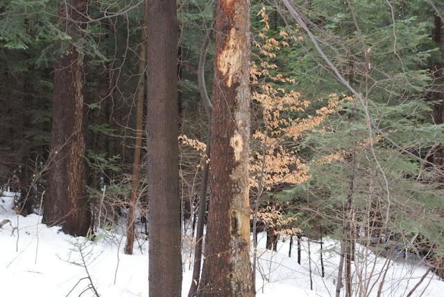 Zajęcia terenowe 29 lutego 2012 - DSC06207_1.JPG