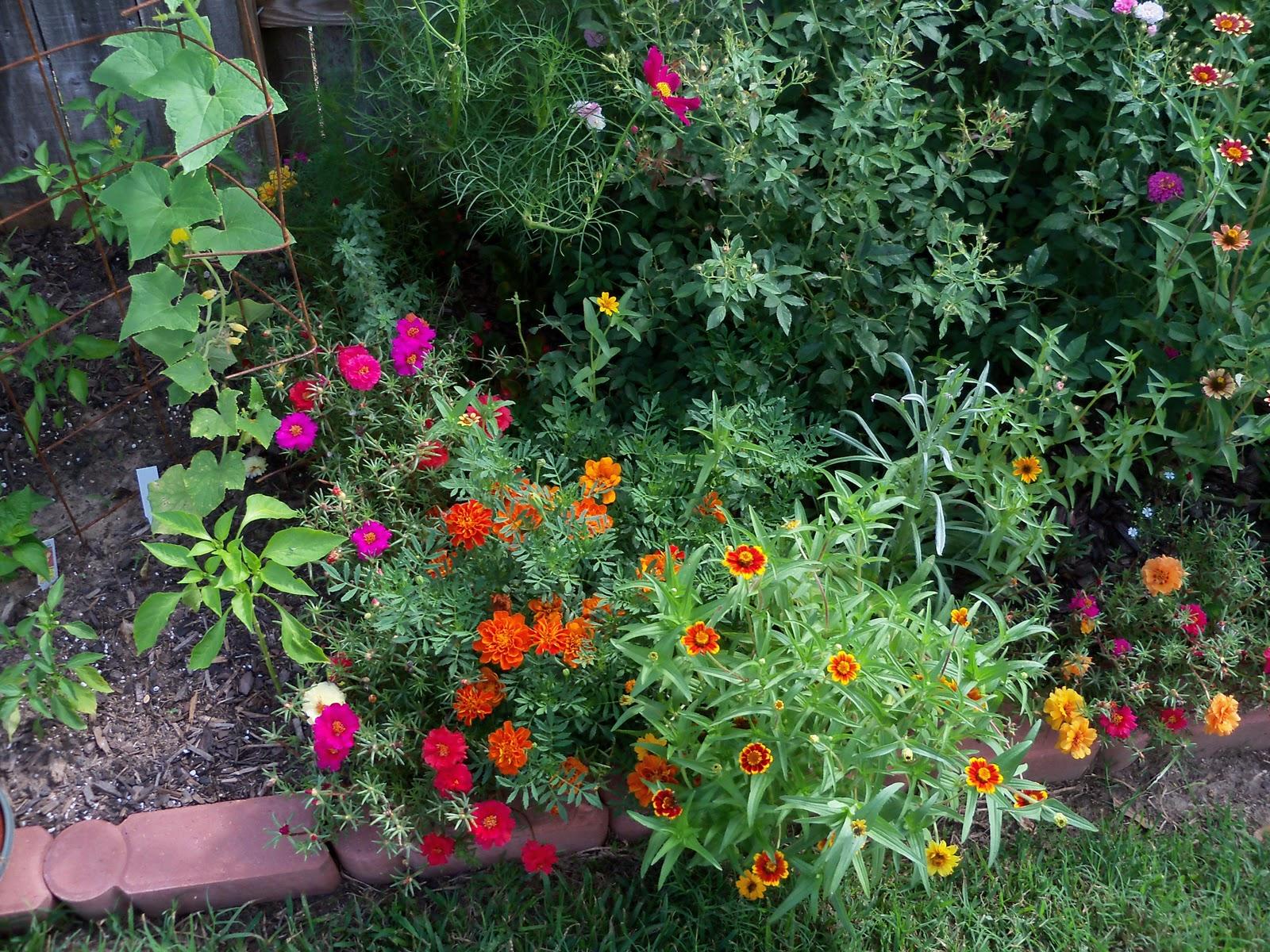 Gardening 2010, Part Three - 101_3702.JPG