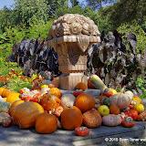 10-26-14 Dallas Arboretum - _IGP4335.JPG