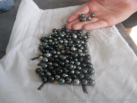 Le perle di Jiji - Raroia