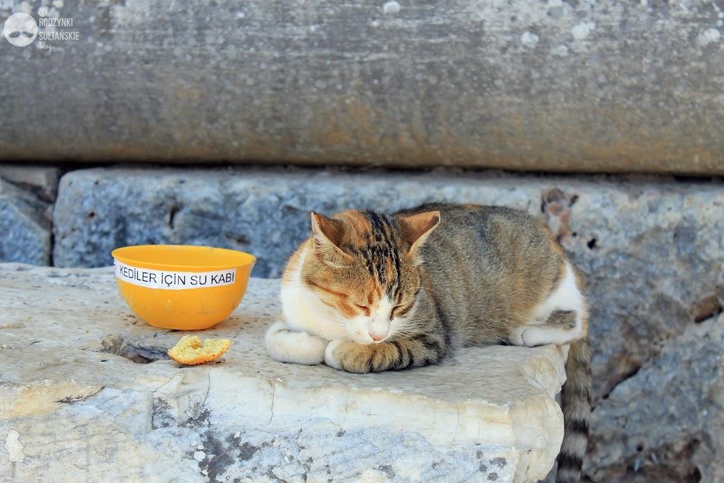 Ruiny antycznego miasta słynne są także z niecodziennych mieszkańców - bezpańskich kotów, które stanowią wdzięczny obiekt fotografii turystów. Do obowiązków pracowników muzeum należy m.in. dbanie o czworonogi poprzez wystawianie im jedzenia i wody.