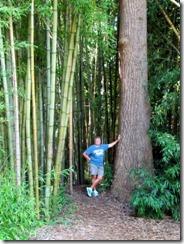 Bamboo at Oconaluftee Island Park in Cherokee