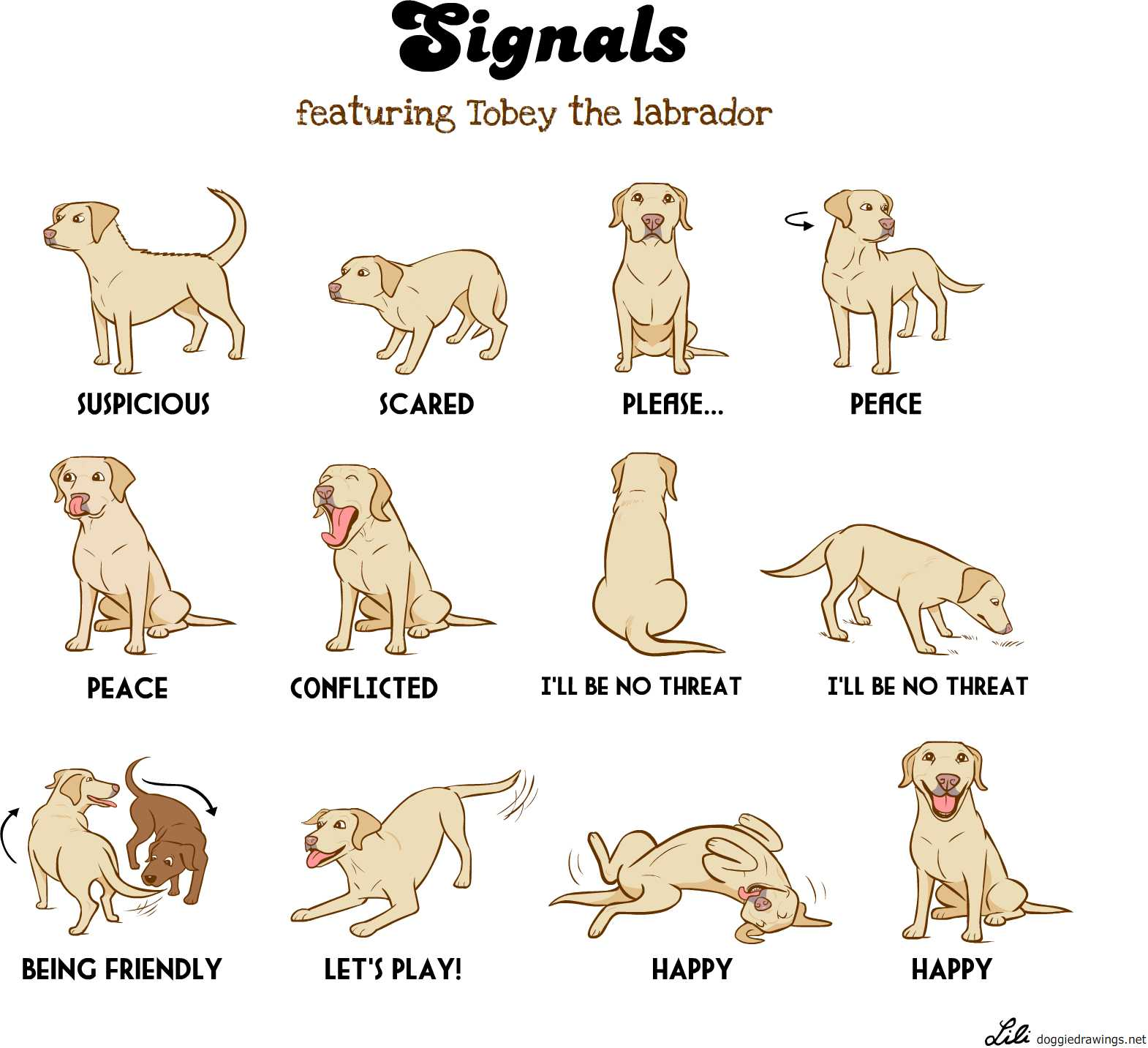 image gallery dog signals