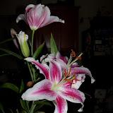 Bouquets - 101_0220.JPG