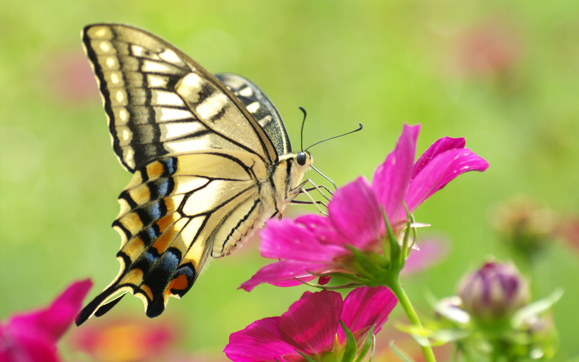 Flower Wallpapers Hd Butterfly And Flower Wallpaper
