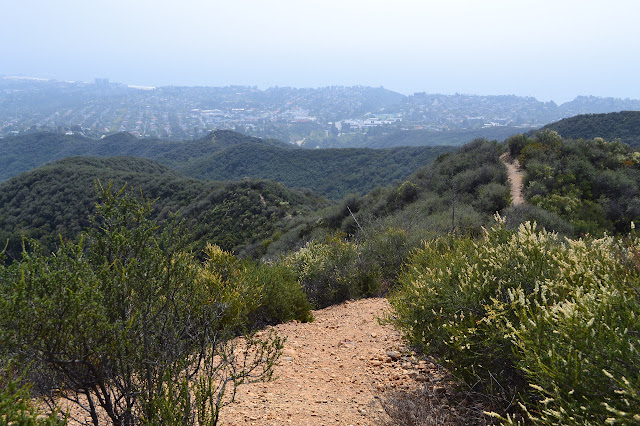 well established use trail along the ridge