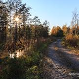 Болотняя осень