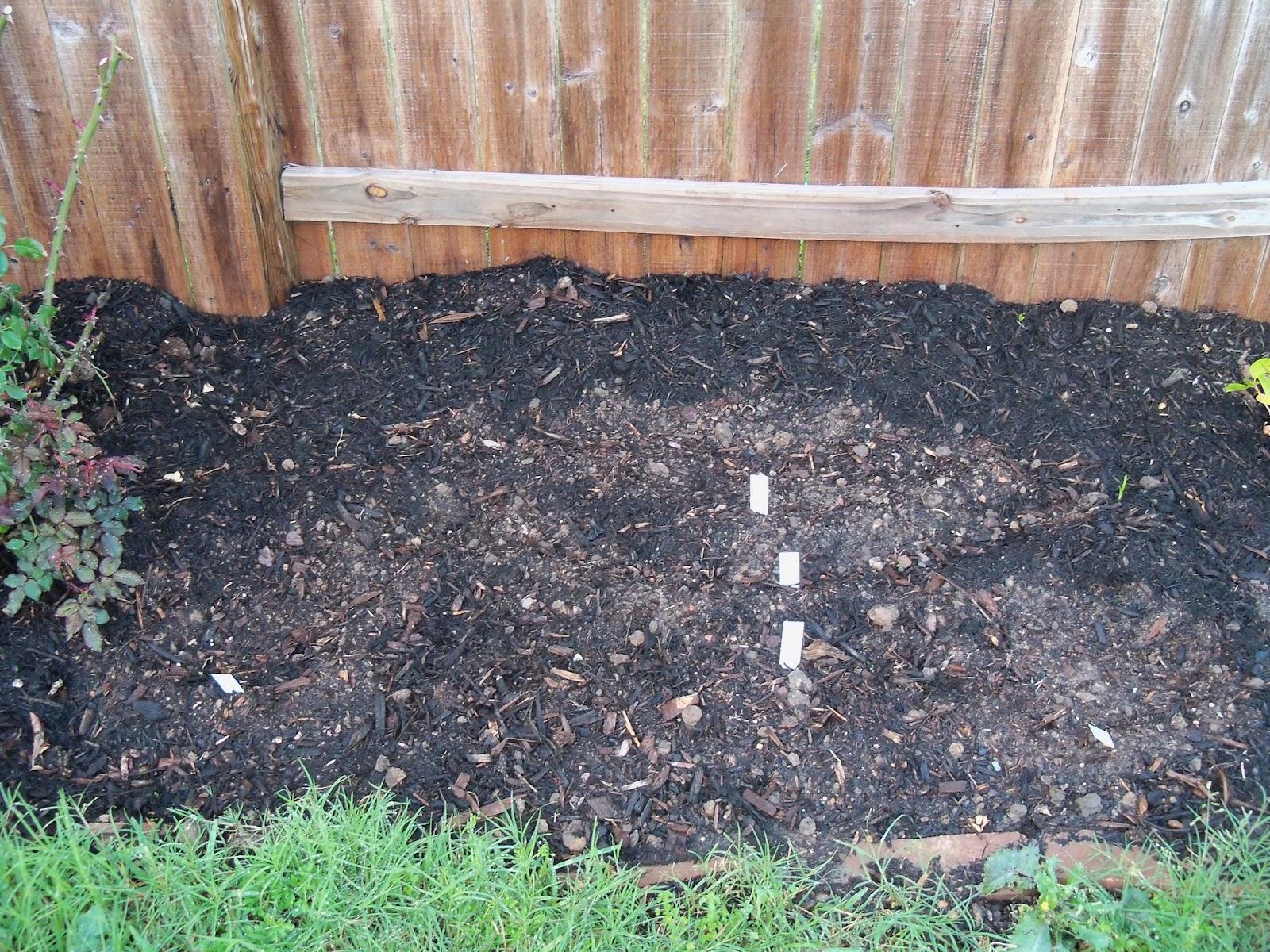 Gardening 2011 - 100_6755.JPG